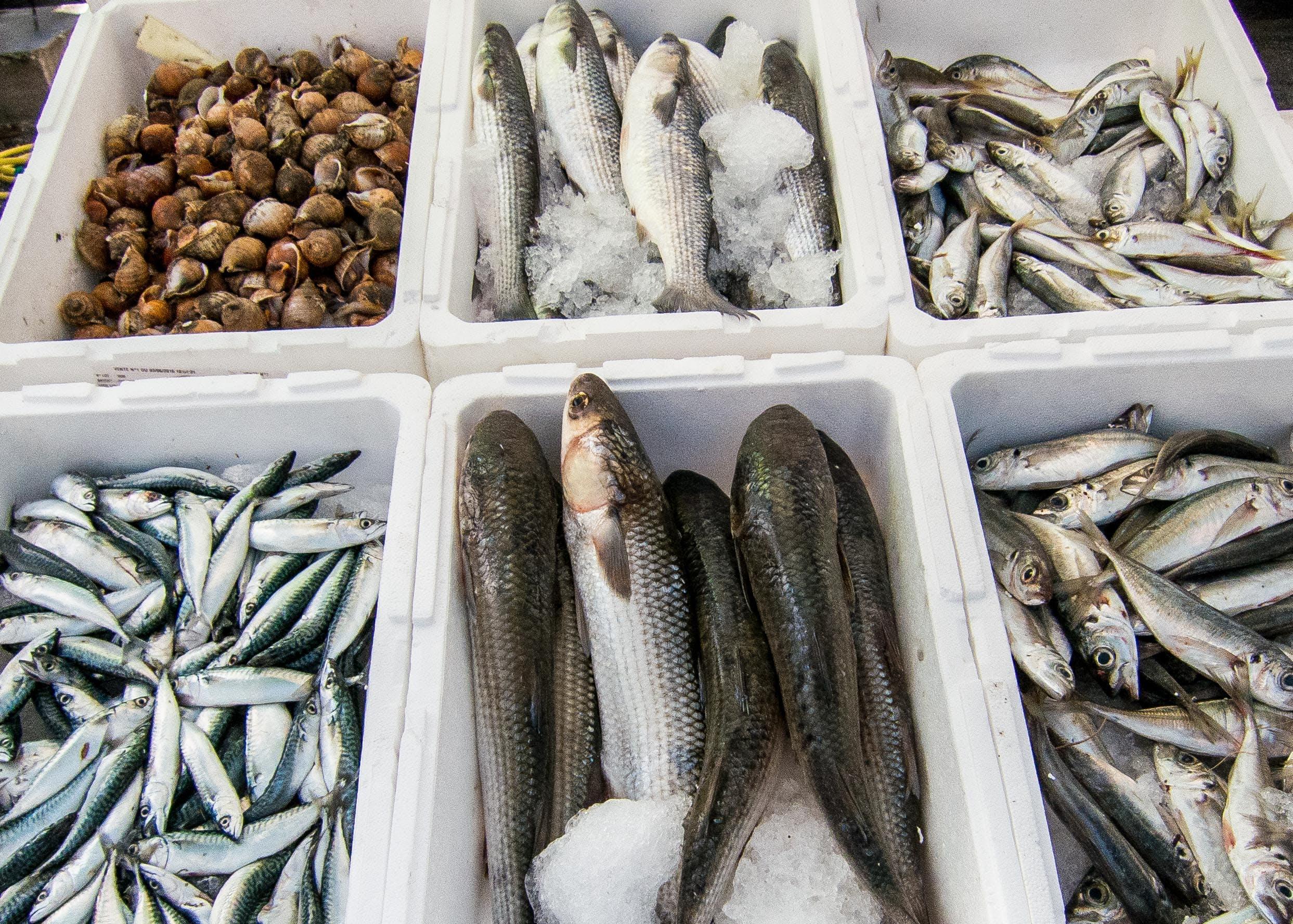 Free stock photo of fish, sardines