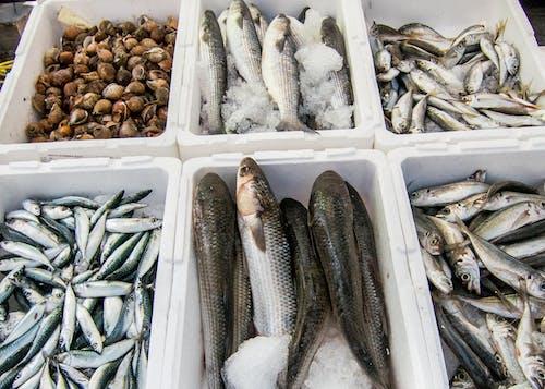 Gratis arkivbilde med fisk, sardiner