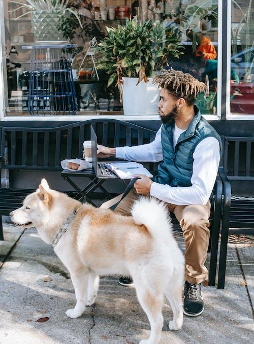 Focused black man with dog browsing laptop on street