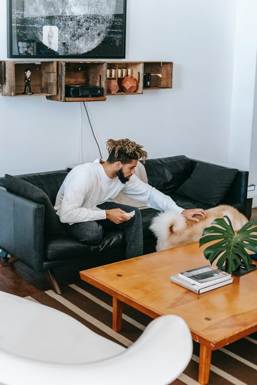 Side view of African American male owner stroking shaggy dog while sitting on sofa near wooden table with green plant in living room