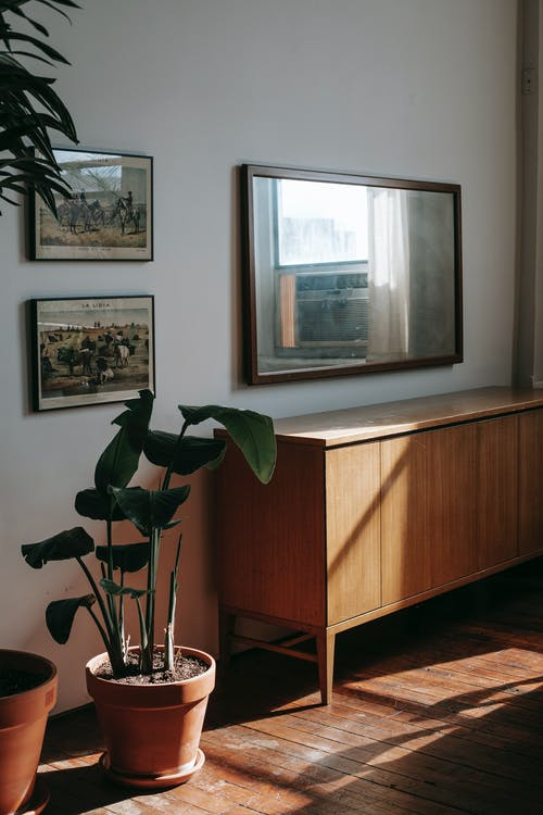 Wooden cabinet near green potted houseplant placed on wooden floor near wall with mirror and framed pictures in sunny room