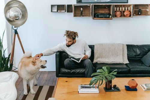 Bearded African American male owner with dreadlocks sitting on sofa with book while stroking Akita Inu in living room with wooden table