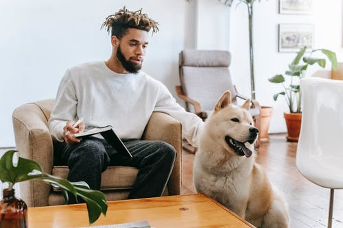 Bearded African American male sitting on armchair with notepad near table while stroking Akita Inu in living room with plants