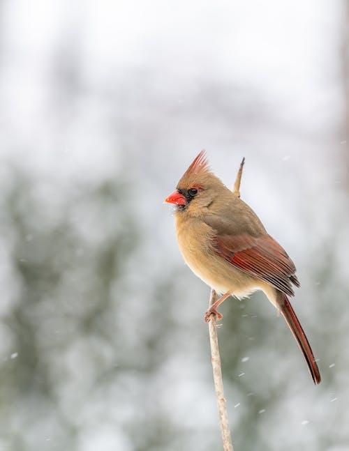 Cute bird sitting on tree branch in frozen winter forest