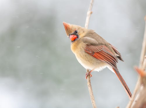 Funny bird sitting on leafless tree in winter woods