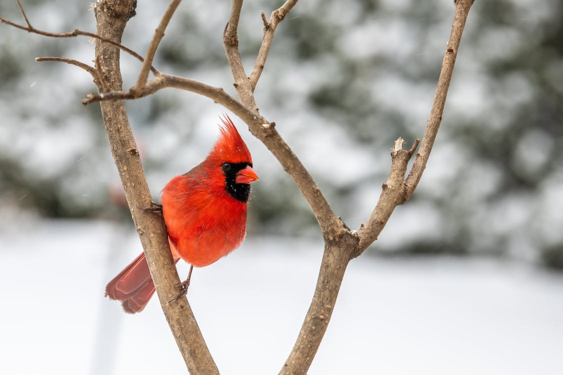 Colorful bird sitting on tree branch in winter