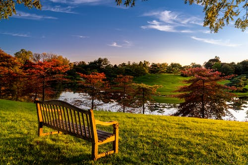 Bench on green shore of lake in park