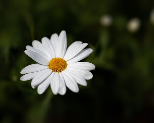 From above of blossoming flower with white petals growing among grass in wildlife