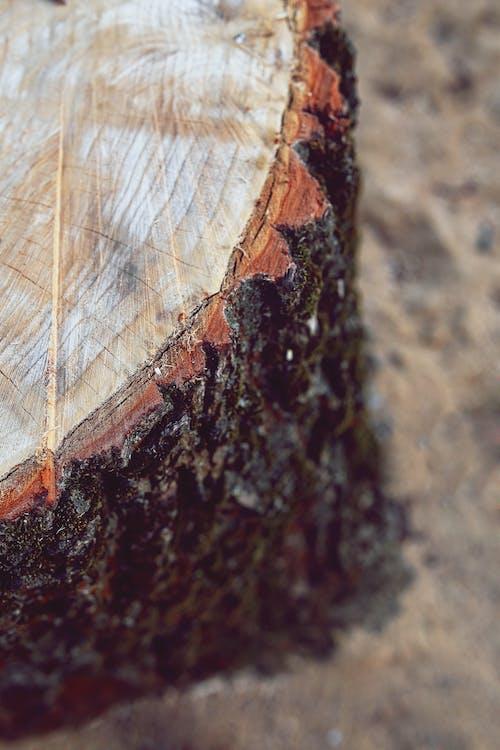 Darmowe zdjęcie z galerii z abstrakcyjny, bagażnik, bezkręgowiec, drewniany