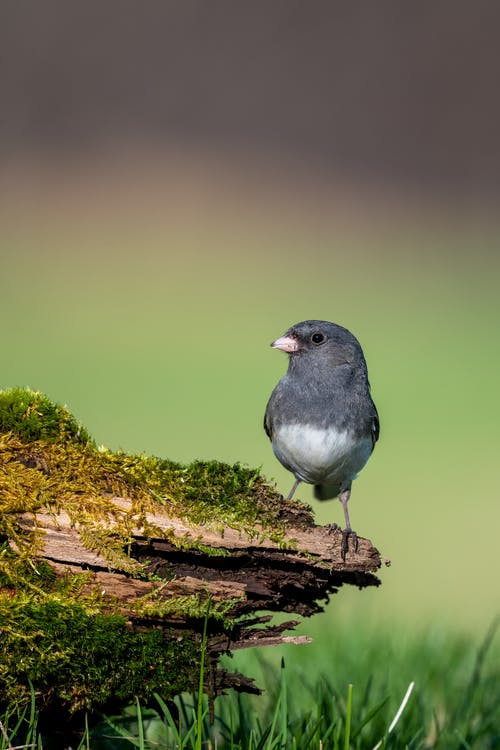 Small bird with gray plumage on moss