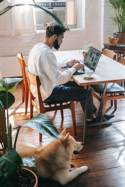 Black man browsing laptop near dog
