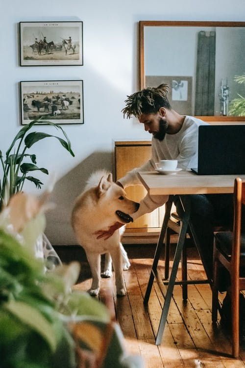 Young bearded African American male freelancer in casual clothes caressing Akita Inu dog while working remotely on laptop at home