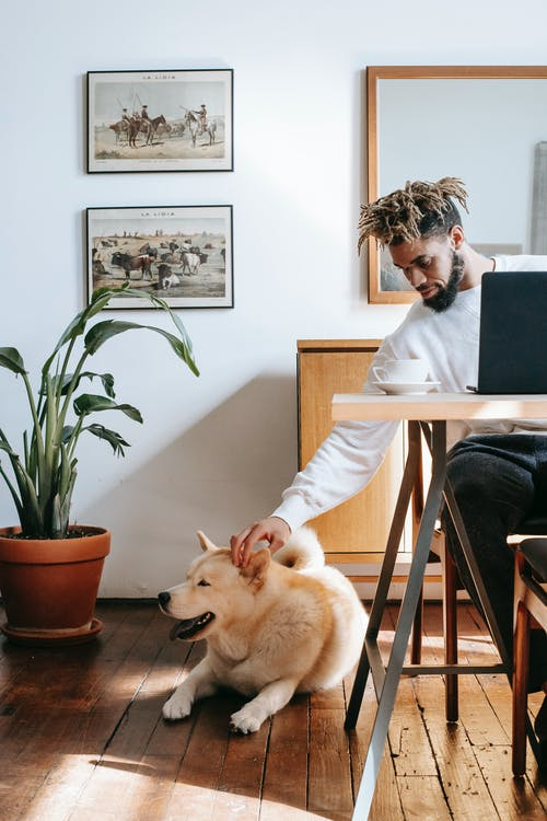 Stylish young black guy petting adorable Akita Inu dog while sitting ta table in cozy apartment and working remotely on laptop