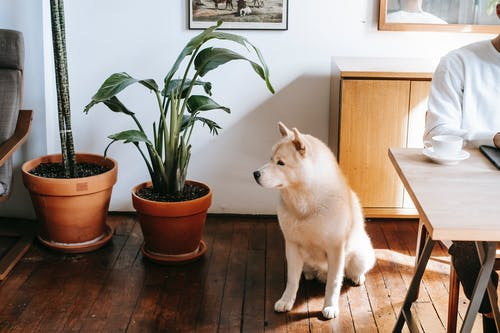 Crop person sitting at table with coffee cup near purebred dog