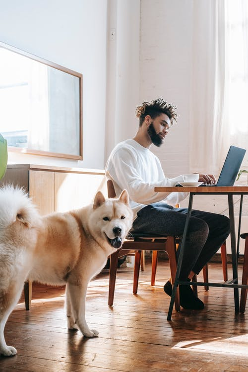 Curious Akita Inu dog standing near black male owner typing on laptop