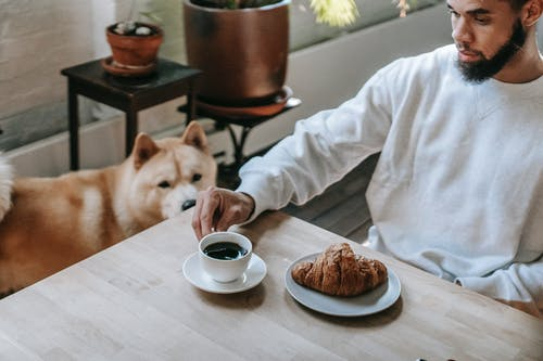 Bearded black man having breakfast during weekend at home with Akita Inu dog