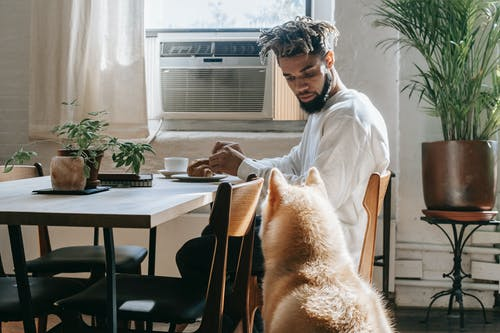 Young black guy having breakfast and looking at hungry pet in kitchen