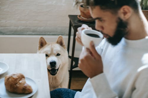 Young black man drinking coffee near curious Akita Inu dog at home
