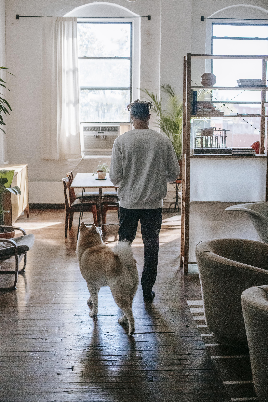anonymous guy walking at home with loyal akita inu dog