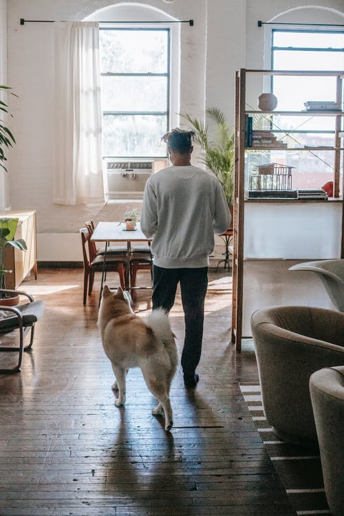 Back view of unrecognizable young man with Akita Inu dog walking in stylish apartment during weekend