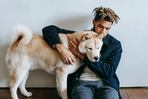 Young African American male with dreadlocks embracing cute fluffy funny Akita Inu dog on floor