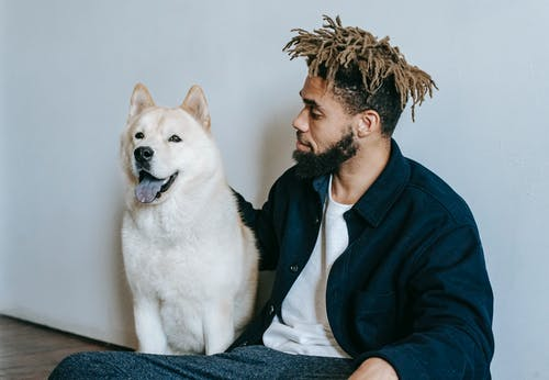 Bearded young African American male with dreadlocks patting cute obedient Akita Inu dog while resting on floor
