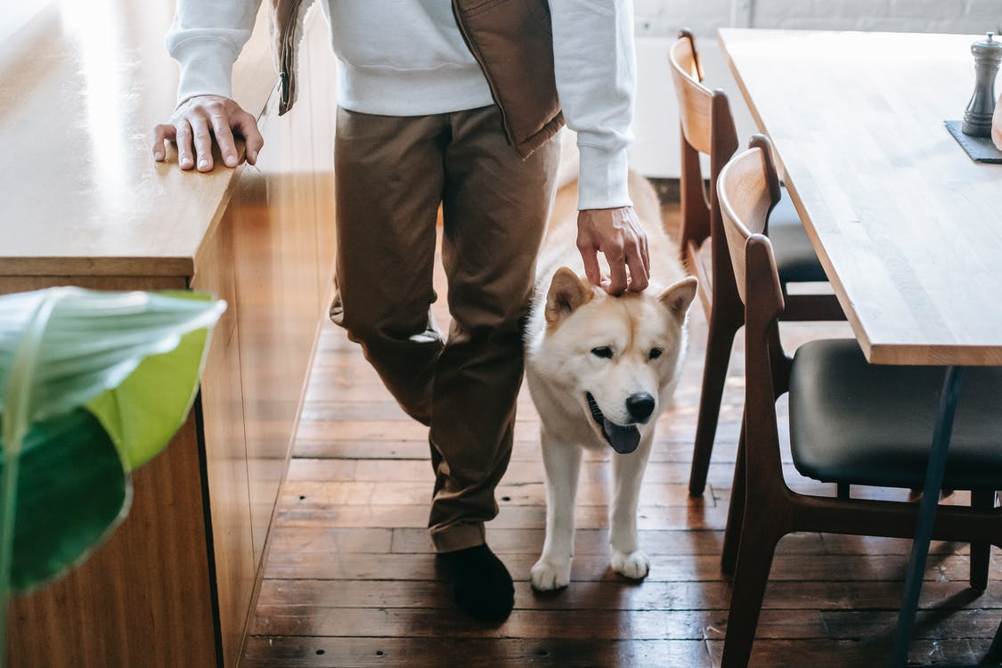 Anonymous man stroking purebred dog in kitchen