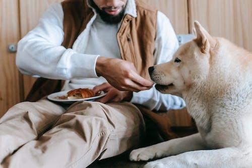 Faceless male feeding purebred dog on floor