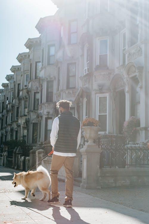 회색과 흰색 줄무늬 셔츠에 갈색 짧은 입히는 개 옆에 서있는 남자