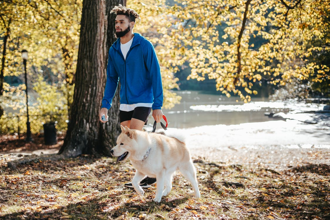 African American male walking with dog in park