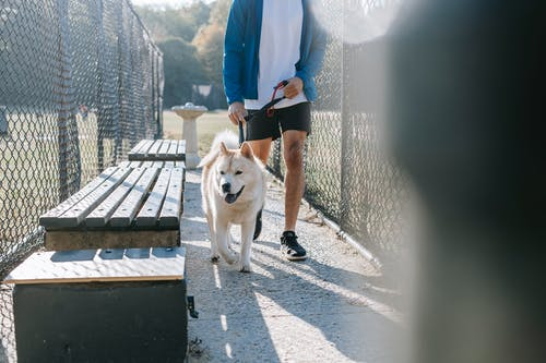 Anonymous male walking with dog in park