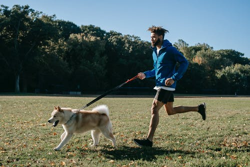 Active man training with dog