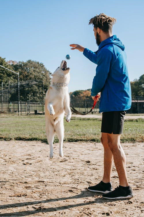 Side view of young man in sportswear training jumping dog  on sunny day