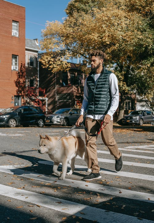 Full body of young ethnic male in trendy outfit looking away while walking with dog on street