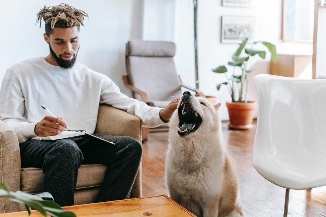 Serious ethnic male in casual clothes sitting on armchair and petting adorable dog while taking notes in notebook at home