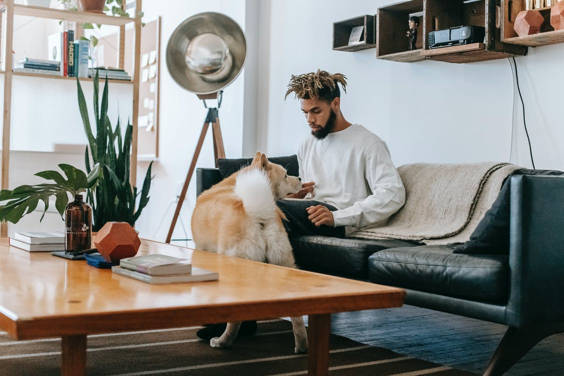 Focused freelancer working remotely from home while sitting on sofa near cute dog
