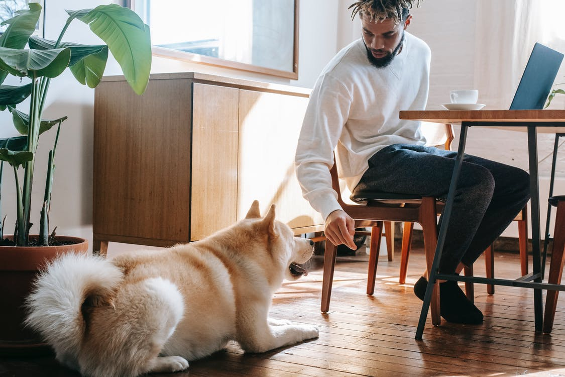 Man In White Long Sleeve Shirt Sitting On Chair Beside A Dog