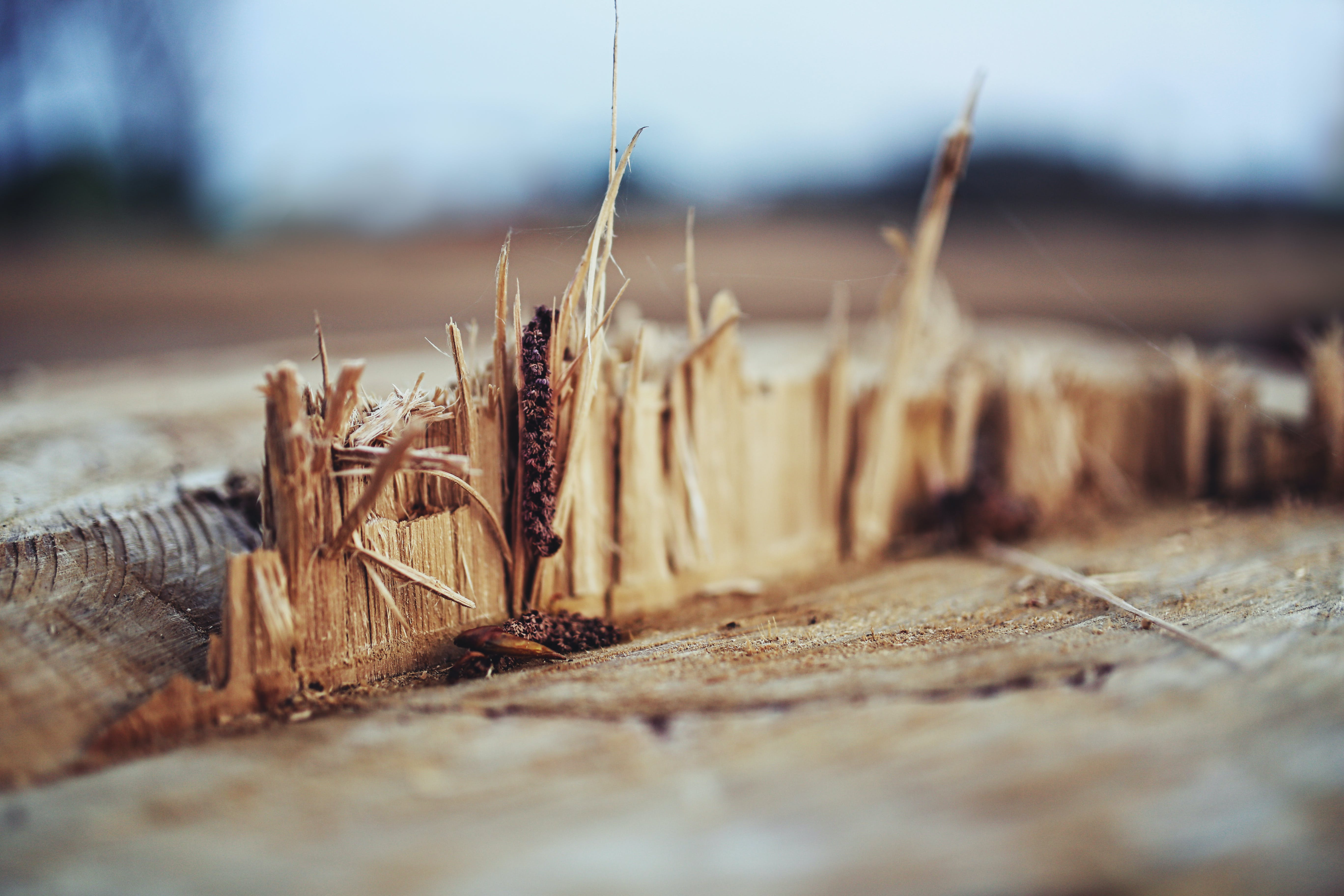 Wood shreds