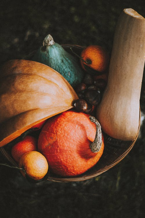 From above of multicolored pumpkins harvested in autumn season and collected in wicker basket