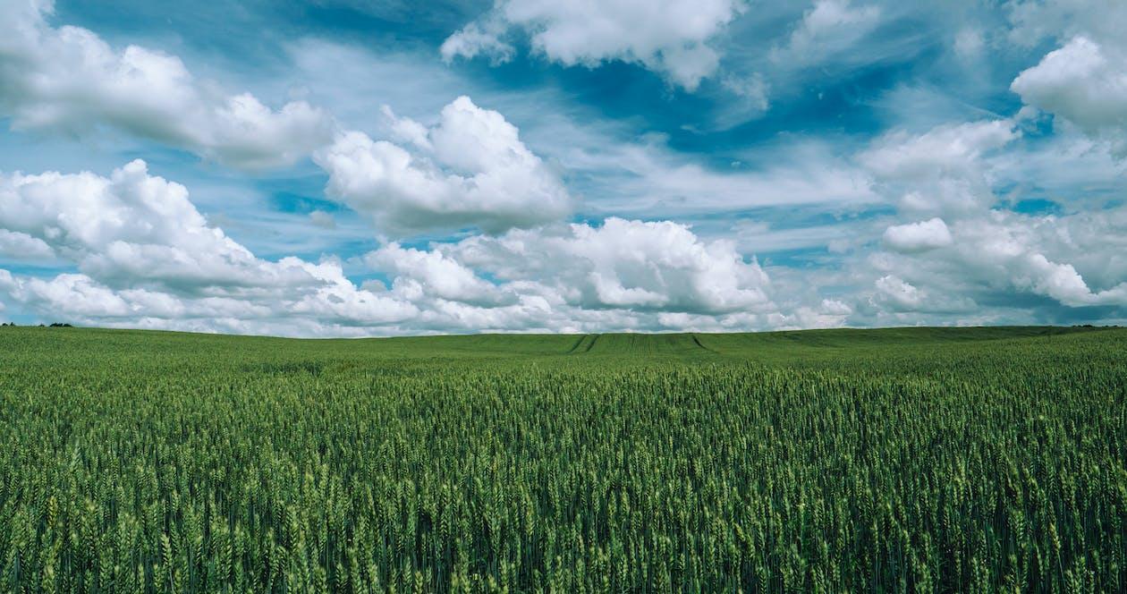 구름, 녹색, 농경지