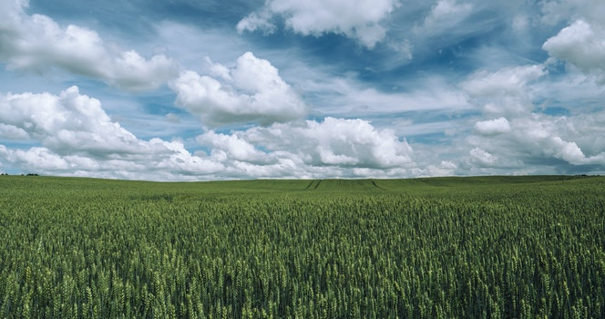 Free stock photo of nature, sky, clouds, field