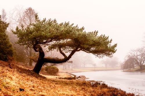 Trees growing on shore near pond in foggy weather