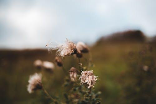 Wilted flowers growing in grassy meadow