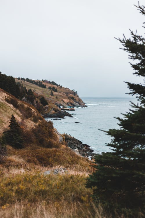 Rocky coast covered with spruce in autumn