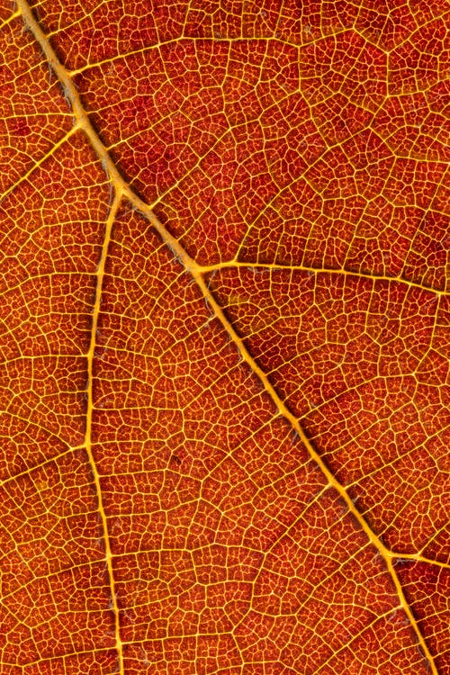 Closeup of textured surface with chaotic veins of dry orange tree leaf as abstract background