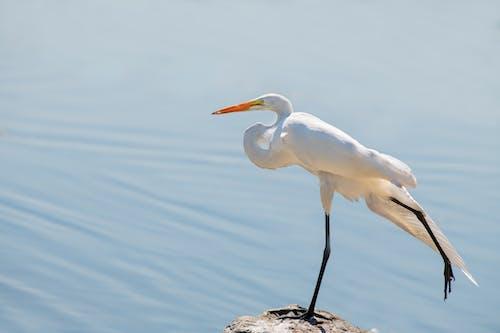 Cute white heron standing on stony shore of lake in sunlight