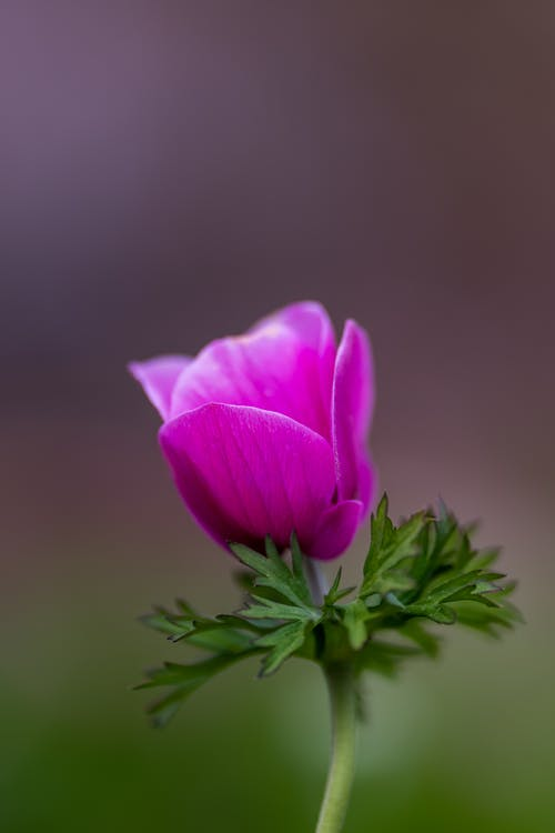 Fotobanka sbezplatnými fotkami na tému botanický, botanika, bylinkový