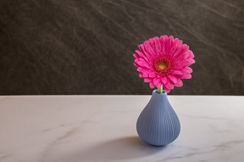 Vase with bright pink Gerbera jamesonii flower placed on marble table