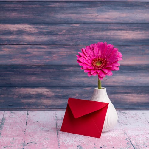 Gerbera jamesonii flower in vase placed on table with red envelope