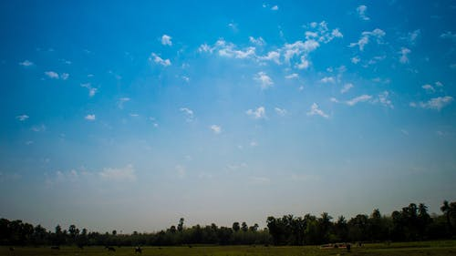 Free stock photo of blue sky, india, nature, noon